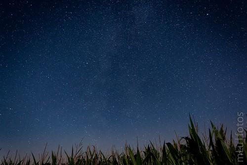 Field of Stars 1