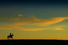 Alma farroupilha (Eduardo Amorim) Tags: brazil horses horse southamerica brasil criollo caballo cheval caballos cavalos pelotas pferde cavalli cavallo cavalo gauchos pferd riograndedosul pampa hest hevonen campanha brsil chevaux gaucho  amricadosul hst gacho  amriquedusud  gachos  sudamrica suramrica amricadelsur  sdamerika crioulo caballoscriollos criollos   costadoce americadelsud  crioulos cavalocrioulo americameridionale caballocriollo eduardoamorim cavaloscrioulos