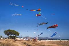 Cacciatori di aquiloni (Tati@) Tags: people beach festival fun day colours joy meeting kites clear bestcapturesaoi elitegalleryaoi mygearandme mygearandmepremium mygearandmebronze mygearandmesilver mygearandmegold rememberthatmomentlevel4 rememberthatmomentlevel1 rememberthatmomentlevel2 rememberthatmomentlevel3 rememberthatmomentlevel7 rememberthatmomentlevel5 rememberthatmomentlevel6