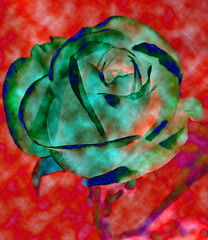 my last Rose (littlestschnauzer) Tags: uk pink flowers blue red roses summer flower green art rose photoshop garden grey petals nikon pretty artistic 9 september whole single elements bloom late layers tones 2012 huddersfield tonal layered my d5000