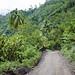 Percorso nella giungla