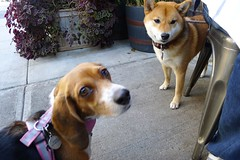 Doggie Company at Brunch (leekimber) Tags: brunch tribeca locandaverde