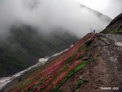 A lonely but lovely place to walk (Tanwir Jogi) Tags: travel pakistan man flower beautiful clouds trekking trek cannon traveling tours lahore treks jogi g9 beautifulpakistan trekkinginpakistan cannong9 tanwir travelinginpakistan rattigali thetrekkerz tourisminpakistan tanwirjogi rattigalilaketrek gattianlaketrek
