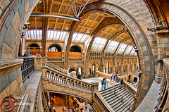 London Museum Fisheye Architecture (david gutierrez [ www.davidgutierrez.co.uk ]) Tags: city uk travel roof light people urban plants building london art glass colors beautiful lines k animals museum architecture stairs photography design high iron artist image pentax earth 5 top contemporary terracotta interior library balcony space awesome low curves columns perspective creative victorian culture arches science exhibition structure stairwell ceiling fisheye chapels vision staircase monkeys panels arcades visitors escher romanesque naturalhistorymuseum dinosaurs nhm k5 mcescher riba edgy darwincentre centralhall alfredwaterhouse impressedbeauty davidgutierrez cathedralofnature fisheyearchitecture pentaxk5