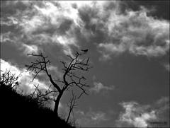Un moment, una vida ( alfanhuí) Tags: life sky blackandwhite tree bird blancoynegro backlight clouds landscape sadness cel silhouete momento vida silueta moment arbre blackbird sella pardal mirlo blancinegre contrallum merla losbuenos