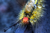 Some Kind Of Bug (It's my whole damn raison d'etre) Tags: county blue red orange black macro alex rain yellow insect virginia nikon caterpillar hdr loudoun purcellville d300s thechallengefactory regionwide erkiletian