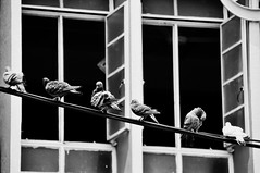 One Of A Kind (eternal_ag0ny) Tags: street white black bird window island photography nikon pigeon malaysia penang nikkor pulau pinang 18200mm d300s