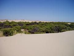Dunas en Doana (Pablo F. J.) Tags: andaluca sand dune arena pinos andalusia duna corral pionero pinuspinaster enp physicalgeography geomorfologa espacionaturalprotegido proteccinambiental naturalprotectedarea geografafsica