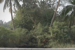 Bangkachao02-Miti Ruangkritya (bigtreesproject) Tags: 447850620339 66835548622 mitiruangkritya miti139hotmailcom mitimiticom wwwmiticom