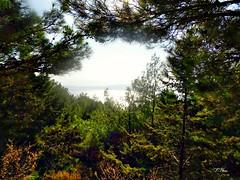 A sea view through the trees!!! (panoskaralis) Tags: pine trees green nature forest wood lesbos lesvosisland island aegeansea greece hellas summer greeksummer summerholidays holidays