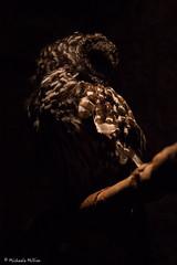 Owl (MichaelaSMillion) Tags: owl animal zoo aquarium wild shadow shadows dark darker darkest feather feathers bird vague curious curiosity hidden light lighting
