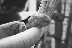 Pookie Paws (AlisAquilae) Tags: cat pet pookie paws feet perspective kitten monochrome wicker chair front porch napping mark twain cute canon canont1i