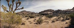Joshua Tree National Park (saskia_i) Tags: joshuatree nationalpark california analog horizonkompakt lomography