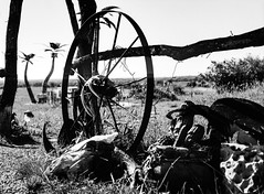 Gateway to the Ranch (Omni-Photography) Tags: ranch cowskull gate gateway rural kansas mamiya mamiya645 film scan