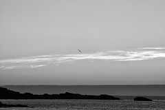 Here (Fly bye!) Tags: gull bird cornwall stives porthmeorbeach sea water wave cloud sky flight flying wing