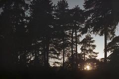 film (La fille renne) Tags: film analog lafillerenne 35mm expired expiredfilm minoltasrt303b 50mmf17 fujifilm fujireala100 sunset landscape sun forrest nature grain