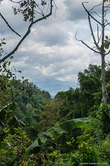 _DSC3939_Bali_09_16 (Saverio_Domanico) Tags: bali indonsie munduk voyage