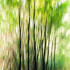 Abstract (hermez) Tags: vienna austria kahlenberg nature abstract trees canoneos5dmk2 canonef3514liiusm green trunks leaves foliage autumn sunny clear forest