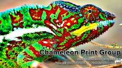 Chameleon Print Group - Urangan, Australia (Chameleon Print Group) Tags: signprinting businesscards promotionalproducts graphicdesignservices printingservices labelprintingservices stickerprintingservices best binding bulk business colour commercial companies company corporate creative custom design digital document format fullcolour graphics highresolution largeformat local office offset print printers printing professional quality service services specialised specialists speciality spotcolour stationery trade wholesale wideformat australia australian queensland widebay frasercoast harveybay bundaberg marlborough sunshinecoast