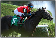 Frostmourne breaks his maiden (Spruceton Spook) Tags: saratoga horseracing horses maidens