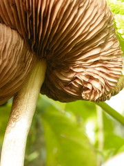 Mushroom (jgimbitzki) Tags: nature natureza photo foto mushroom cogumelo