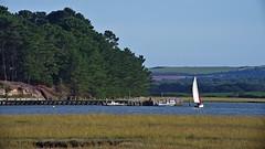1331-12L (Lozarithm) Tags: arne rspb dorset landscape estuary coastline pooleharbour k1 55300 hdpda55300mmf458edwr