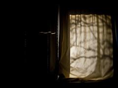 sunny day | 366/285 (angsthase.) Tags: tree window silhouette germany deutschland shadows curtain nrw dailylife thursday schatten ruhrgebiet baum dortmund 2012 donnerstag vorhang ruhrpott 366 mft toylens project365 micro43 olympuspenepl1 slrmagic 26mmf14 slrmagictoylens26mmf14