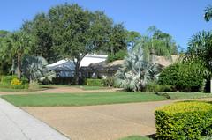 Sarasota - The Landings (roger4336) Tags: house oak florida landscaping palm liveoak sarasota 2012 bismark peregrine thelandings landings bismarckia bismarckpalm peregrinepointcircle