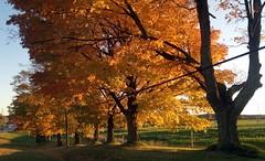 autumn colours Glennville Dairy farm (1) (Ange 29) Tags: autumn trees sunlight canada nokia king colours shadows n8 township formerglennvilledairyfarm