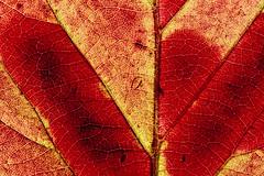 * (Norbert Králik) Tags: autumn macro leaf canoneos5d canonef100mmf28macrousm