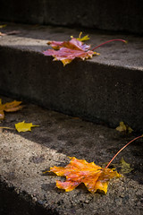 Last Weeks of Autumn (AlanScerbakov) Tags: autumn leaves leaf nikon months 1855mm leafs month lithuania vilnius d3100 alanscerbakov
