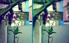 Lens1 (Hong Design) Tags: flower tulips niceflower