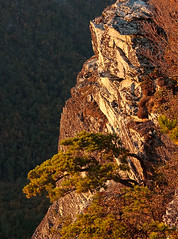 Ancient Sunlight on Jonas Ridge (R. Keith Clontz) Tags: cliff canyon blueridgemountains linvillegorge afternoonsunlight appalachianmountains westernnorthcarolina northcarolinamountains craggytree mossyrocks ancientpine naturalbonsai jonasridge weatheredpine rkeithclontz blueridgepics blueridgelight
