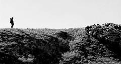 le berger (b.four) Tags: shepherd flock dda berger pastore alpesdehauteprovence coth troupeau supershot coldelarche abigfave diamondclassphotographer flickrdiamond citrit hauteubaye rubyphotographer damniwish coth5 mygearandme ruby10