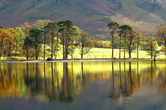 Reflection on Lake Buttermere (PeterYoung1) Tags: autumn trees england reflections landscape colours lakedistrict scenic atmospheric buttermere thelakedistrict lakebuttermere