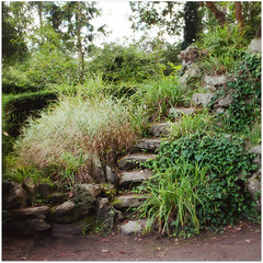 paris-2012 (♥beryl) Tags: plants paris france green leaves stone forest square rocks theater earth steps squarecrop boisdeboulogne radlab nikond90 jardinshakespeare