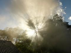feeding the trees while charcoal making (Cookswell Jikos) Tags: energy kenya charcoal sorghum grains drylandfarming