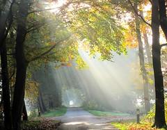 herfst (Truus) Tags: autum herfst zonnestralen