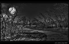 The Path of Dark Shadows