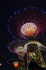 Garden of the Bay - Singapore (San nk) Tags: park camera flowers india macro tower nature beautiful garden lights bay nice interesting fantastic nikon singapore flickr different ngc twin malaysia excellent mode soe sanjai d7000 d3100