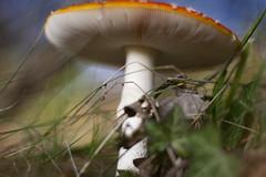 UFO (Djenzen) Tags: mushroom canon jeroen jansen paddestoel 40d djenzen