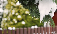 Winterbokeh. ( Dominik J. Photography) Tags: schnee winter snow cold ice nature canon germany deutschland natur dslr dominikjakob