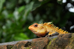 Details!!! (Akash_kumar9) Tags: yellow reptile lizard scales