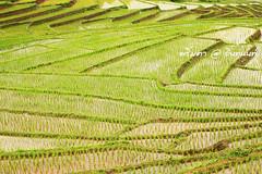 PhamonVillage-DoiInthanon-ChaengMai-Trip_By-P r i m t a a_E10886166-031