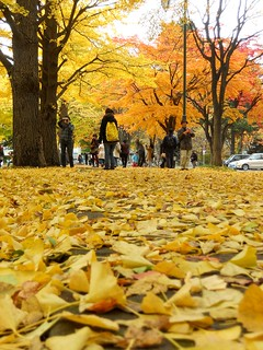 enjoying their autumn