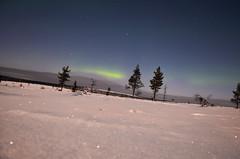 Northern lights - Aurora borealis (fede_gen88) Tags: trees winter light sky snow cold green night suomi finland stars nikon europe aurora lapland saariselk northernlights borealis lappi d5100