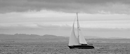 ocean sea blackandwhite sailboat coast boat monterey sailing wind