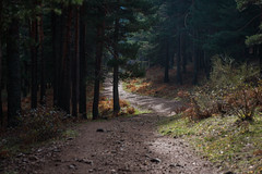 Trail (Brian Hammonds) Tags: madrid travel trees winter light shadow espaa color tourism nature rural forest trekking outdoors photography photo spain woods nikon europe european natural hiking country tourist spanish photographs traveling traveler d600