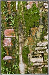 Real Painting (Polis Poliviou) Tags: house plant brick green art home nature grass wall garden painting paint mediterranean bricks natura eco cipro ecological polis zypern greenwall kypros chypre lefkara chipre kypr cypr cypern  kipras ciprus realpainting lovecyprus republicofcyprus    poliviou polispoliviou    cyprusinyourheart    sayprus polispoliviou2012 chipir wwwpolispolivioucom yearroundisland cyprustheallyearroundisland