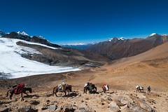 Pack horses (Alex Treadway) Tags: nepal nationalpark asia np himalayas dolpo dolpa mountainousarea himalayanregion trekkingarea sheyphoksundonationalpark